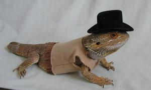 cowboy-costume-for-bearded-dragons