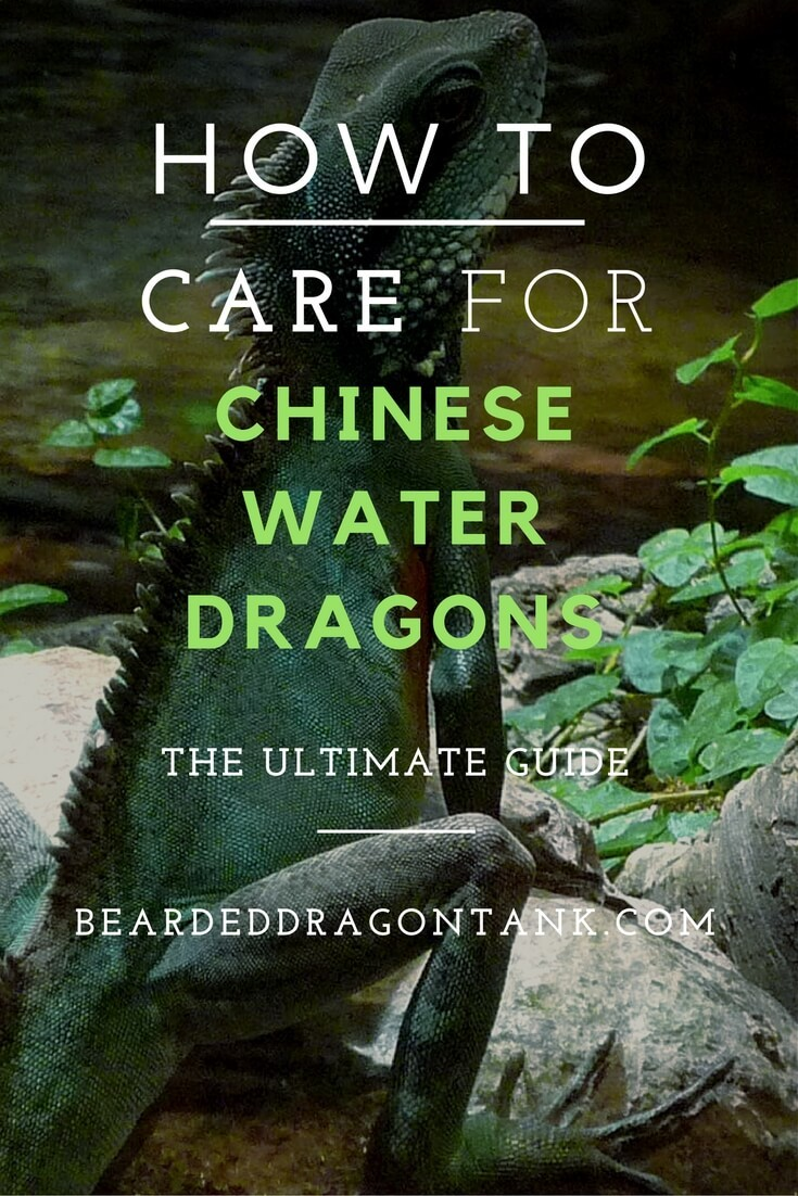 Chinese Water Dragon Care Sheet Bearded Dragon Tank