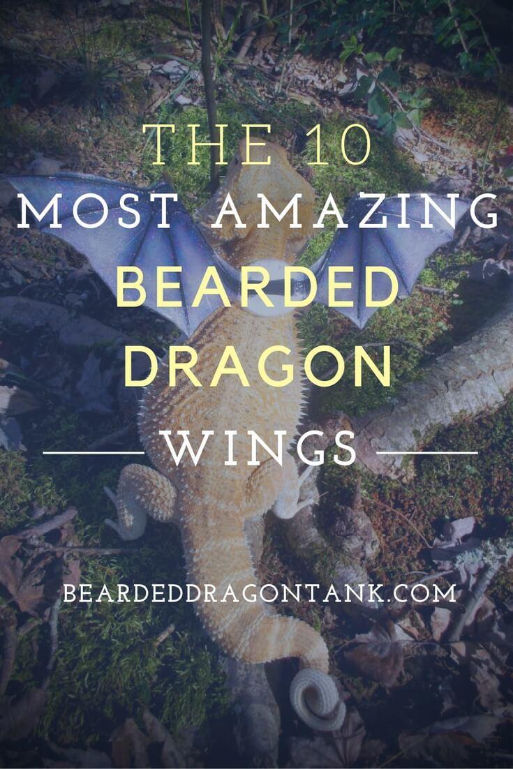 bearded dragon wings template www