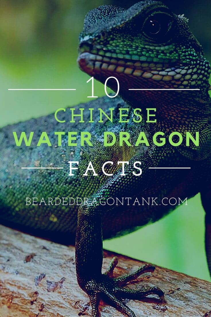 10 Facts About Chinese Water Dragons Bearded Dragon Tank