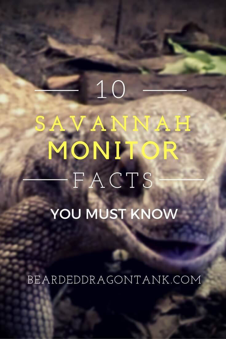 Savannah Monitor Facts