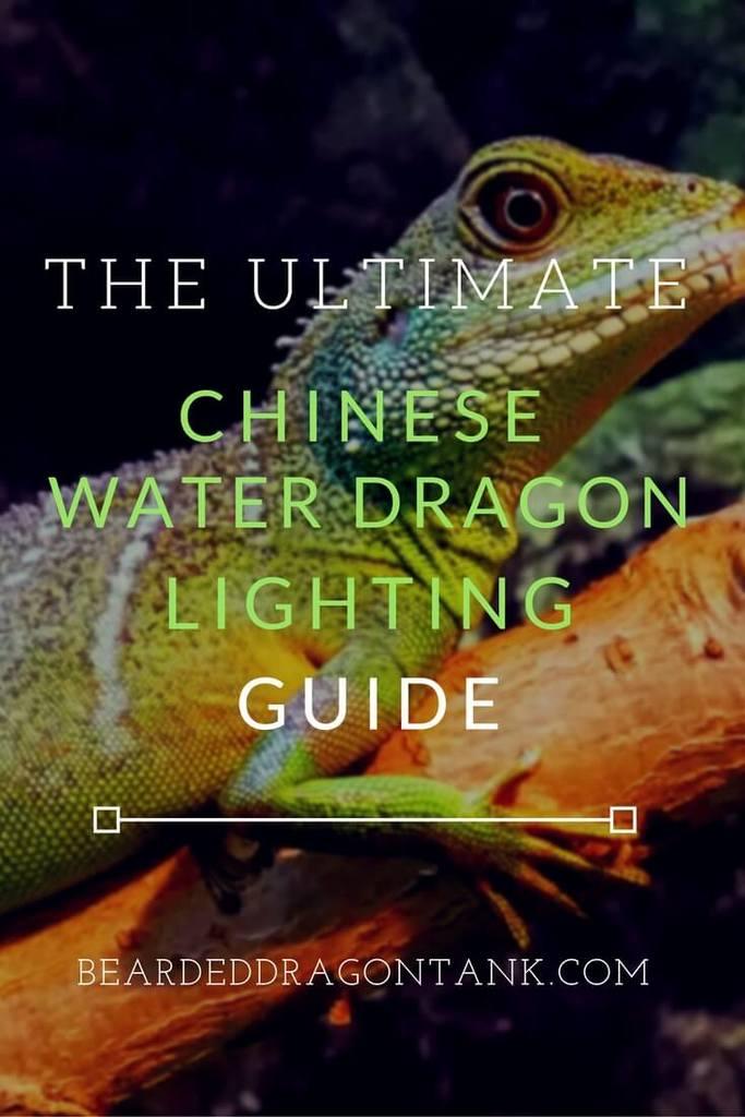 Best Chinese Water Dragon Lighting Bearded Dragon Tank