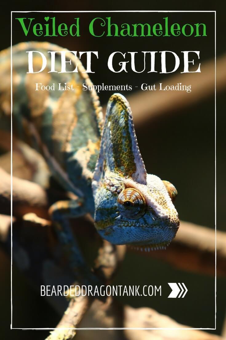 Veiled Chameleon Diet