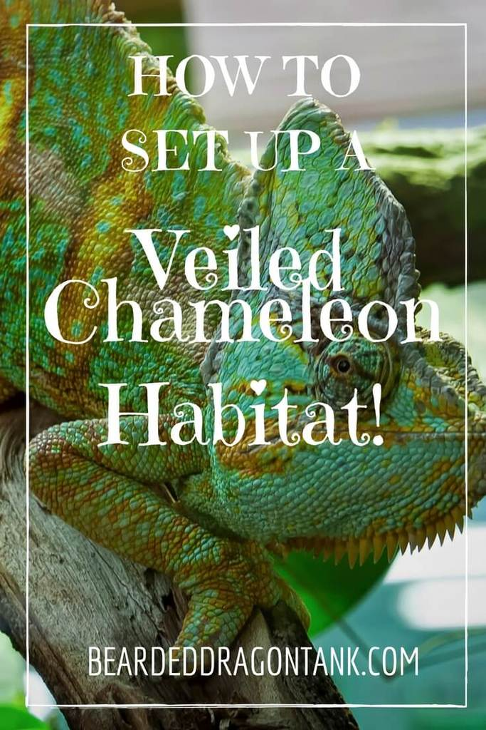 How To Set Up The Perfect Veiled Chameleon Cage | Bearded