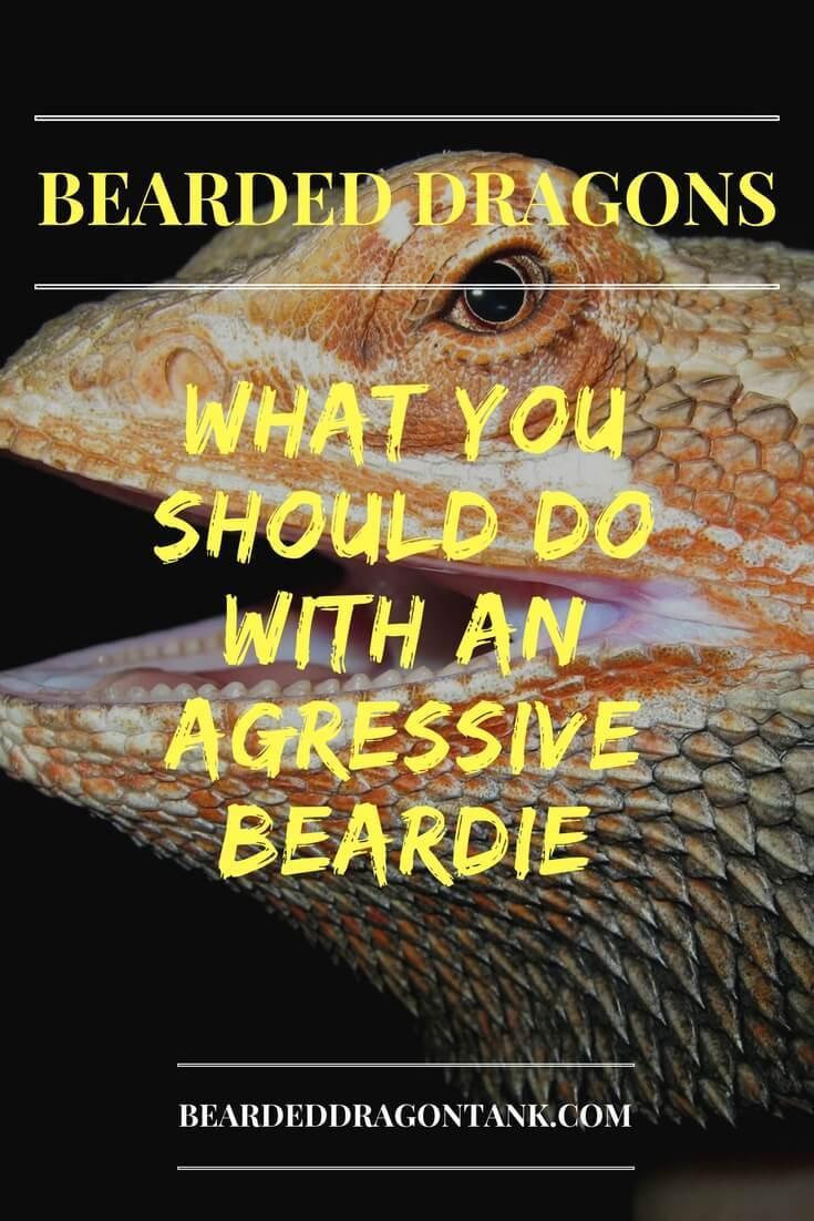 Bearded Dragon Aggressive