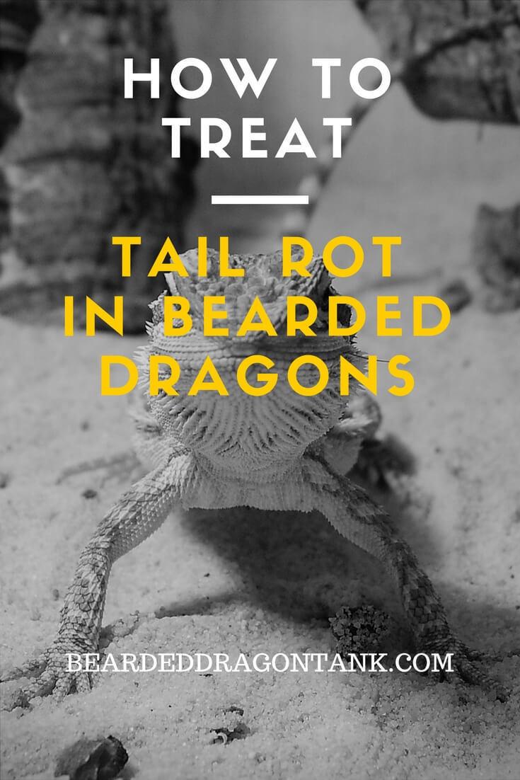 Bearded Dragon Tail Rot