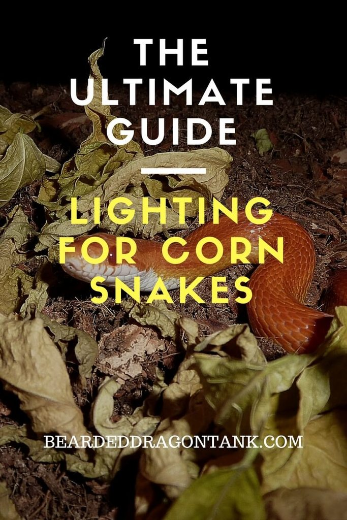 Corn Snake Lighting
