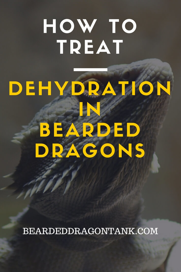 Bearded Dragon Dehydration