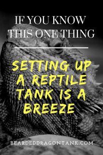 How To Make Setting Up A Reptile Tank Easy