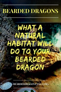 Natural Bearded Dragon Housing