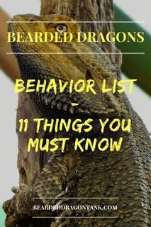 Bearded Dragon Behavior List