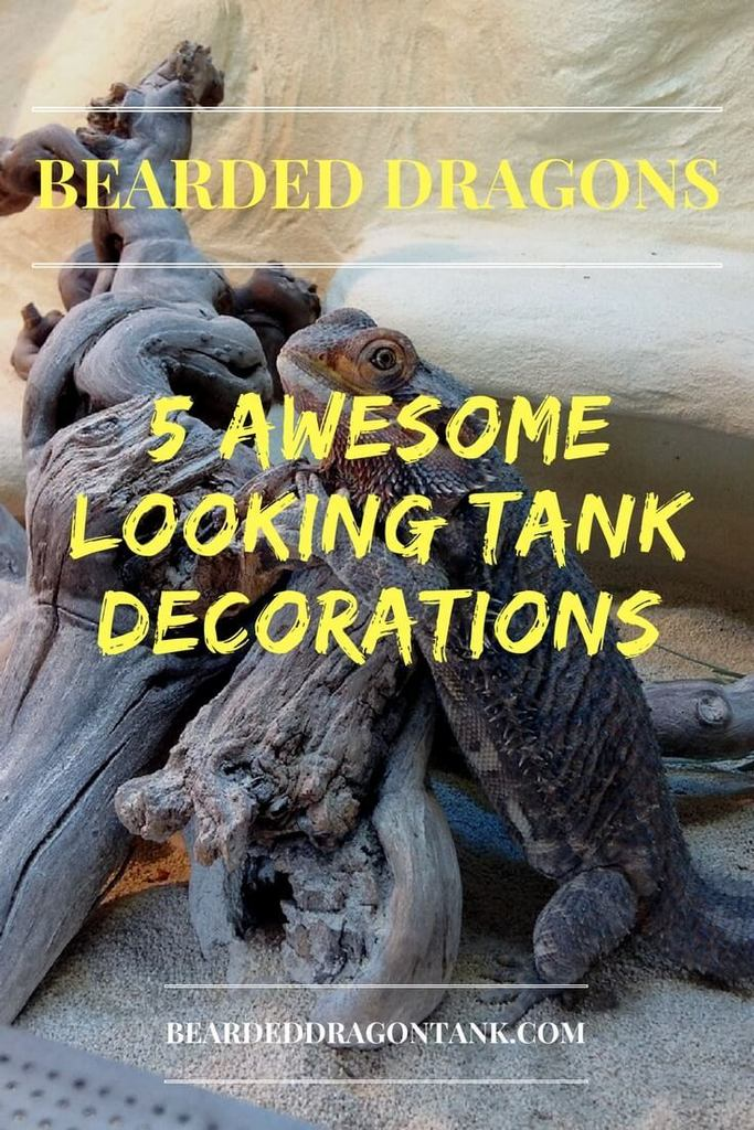 Bearded Dragon Tank Decor Bearded Dragon Tank