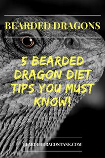 bearded dragon diet tips