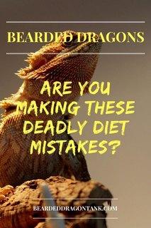 Bearded Dragon Diet