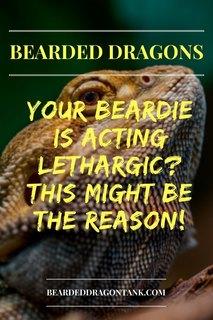 Bearded Dragon Lethargic