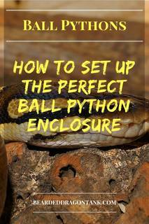 Ball Python Enclosure