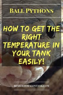 Ball Python Temperature
