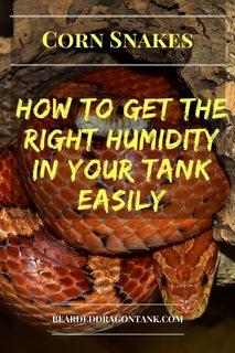 Corn Snake Humidity