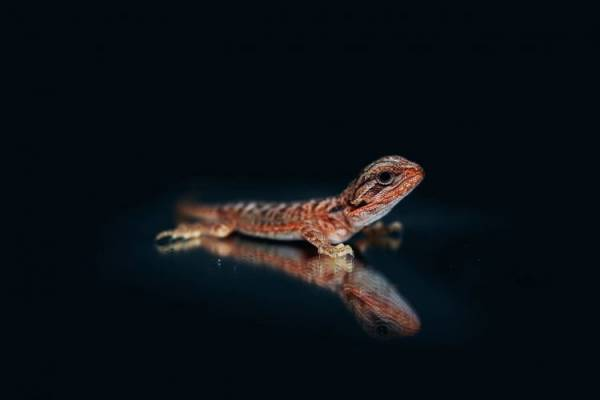 best lighting for bearded dragons