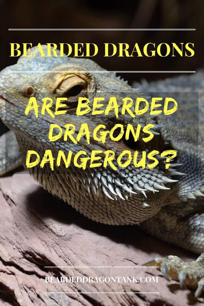 Are Bearded Dragons Dangerous