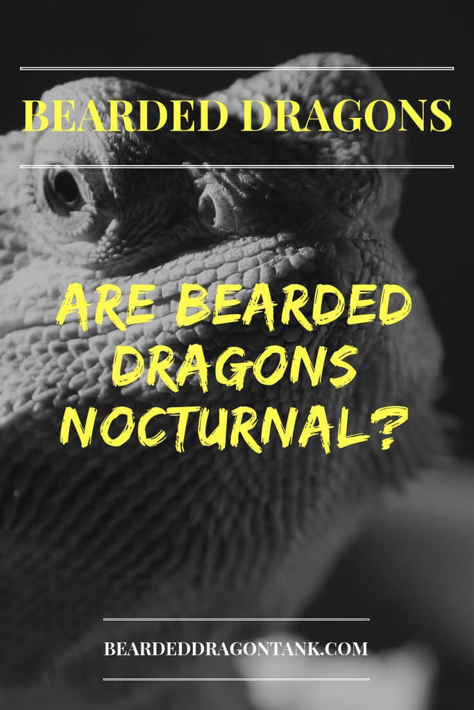 Are Bearded Dragons Nocturnal