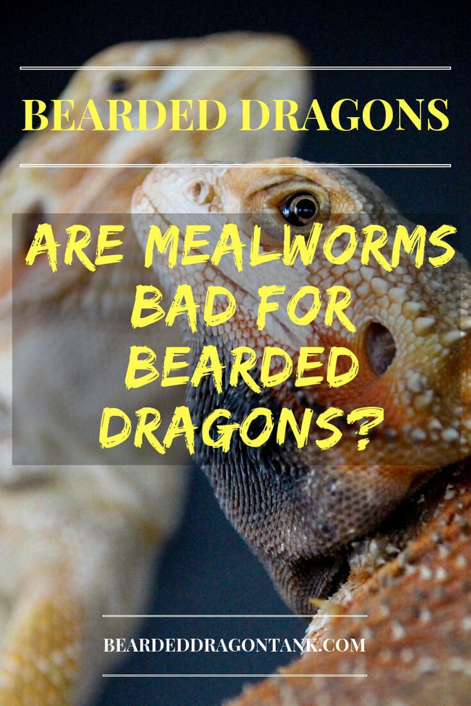 Are Mealworms Bad For Bearded Dragons