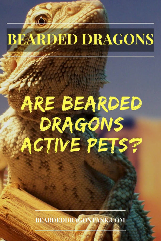 Are bearded dragons active pets