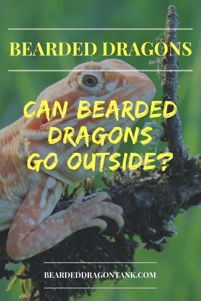 Can Bearded Dragons Go Outside