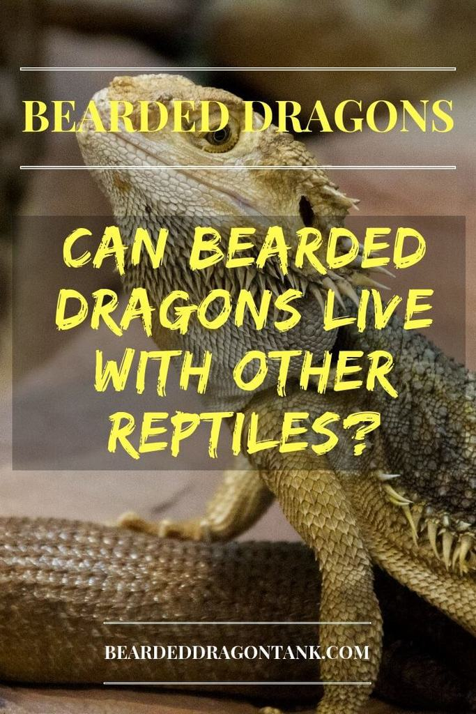 Can Bearded Dragons Live With Other Reptiles