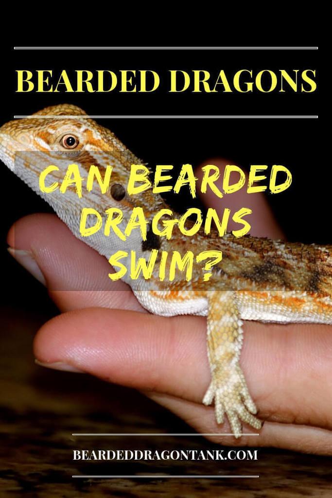 Can Bearded Dragons Swim