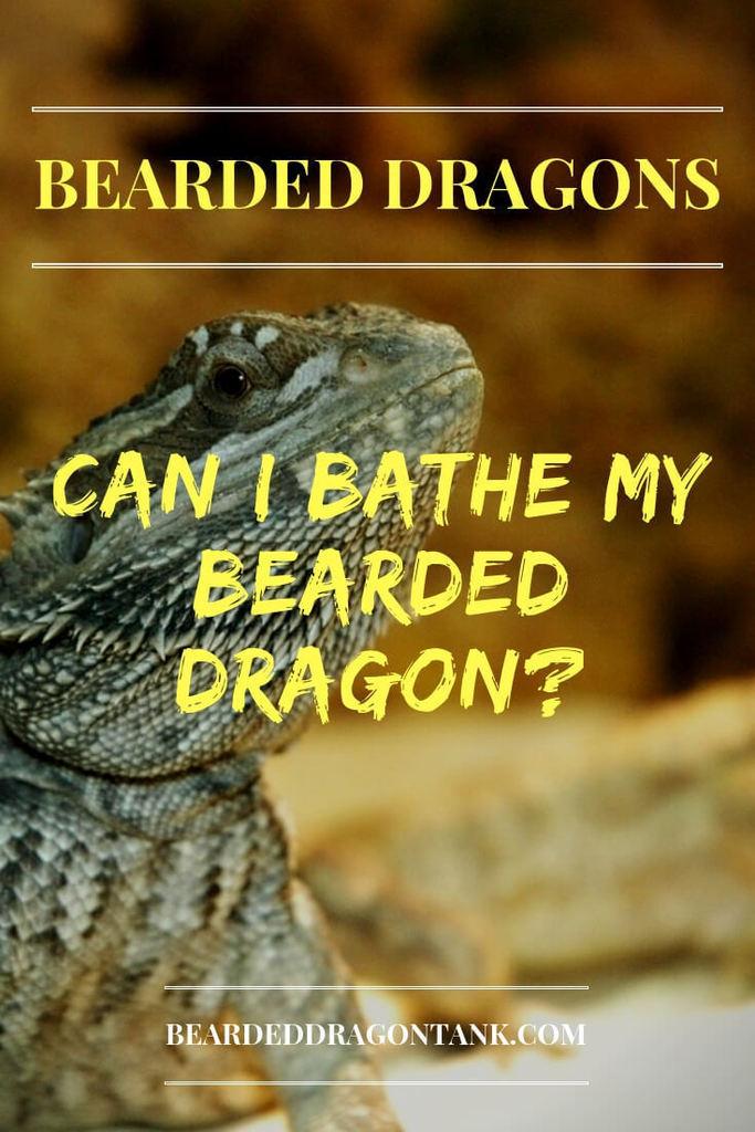 Can I Bathe My Bearded Dragon