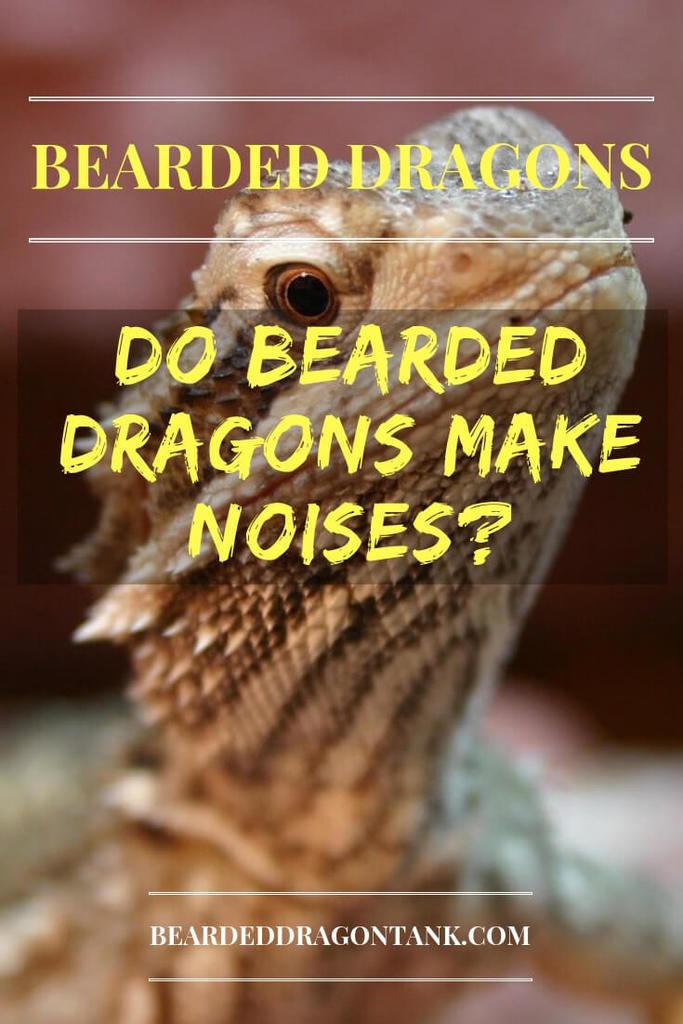 Do Bearded Dragons Make Noises