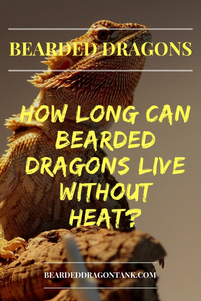 How Long Can Bearded Dragons Live Without Heat