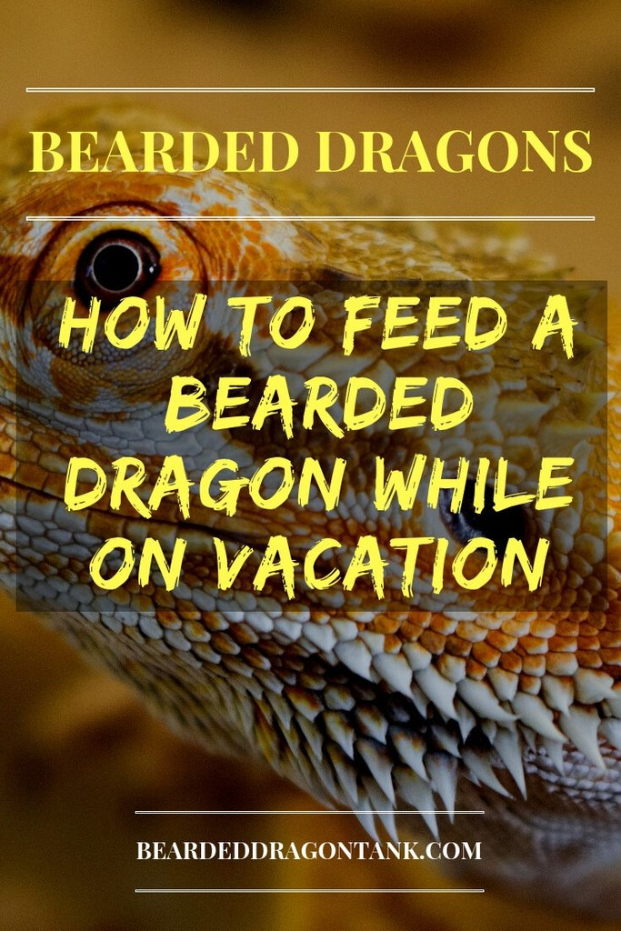 How To Feed A Bearded Dragon While On Vacation