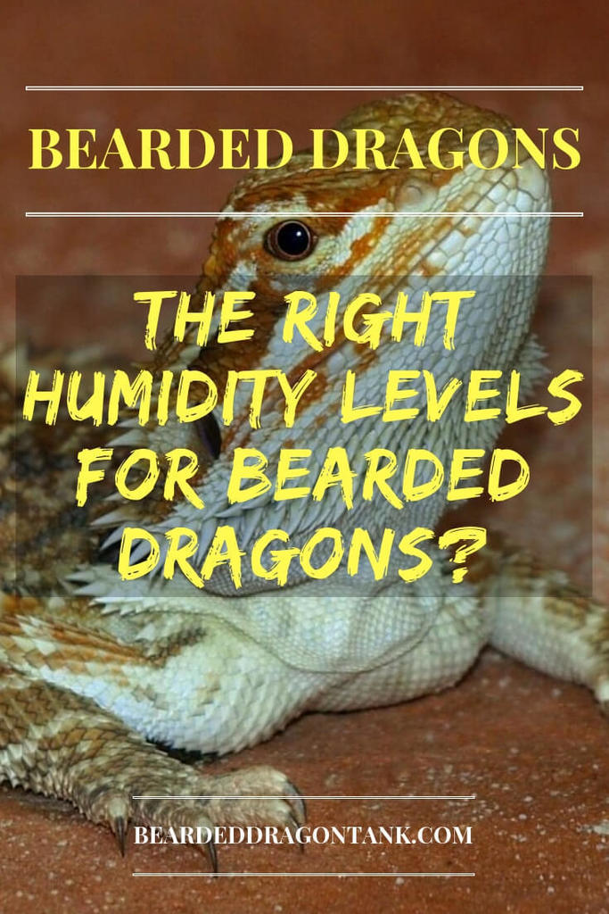 the right humidity levels for bearded dragons it s easy bearded