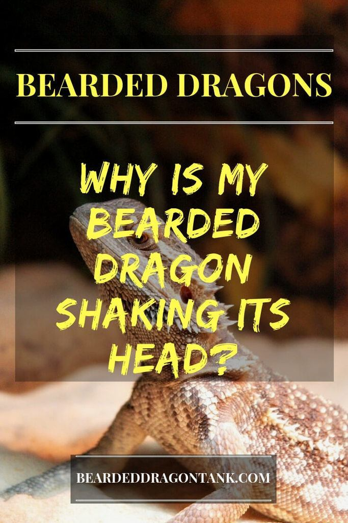 Why Is My Bearded Dragon Shaking Its Head